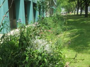 愛大キャンパスの花壇