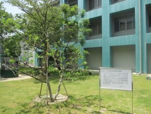 ニュートンのりんごの木